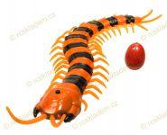 Oranžové stonožka